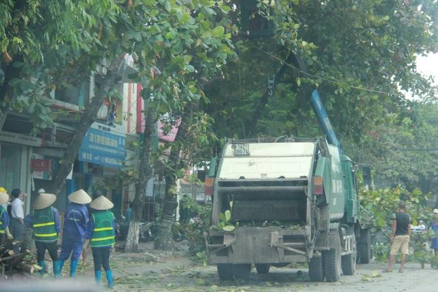 Công nhân công ty cây xanh huyện Vân Đồn cắt cây trước bão để đảm bảo an toàn