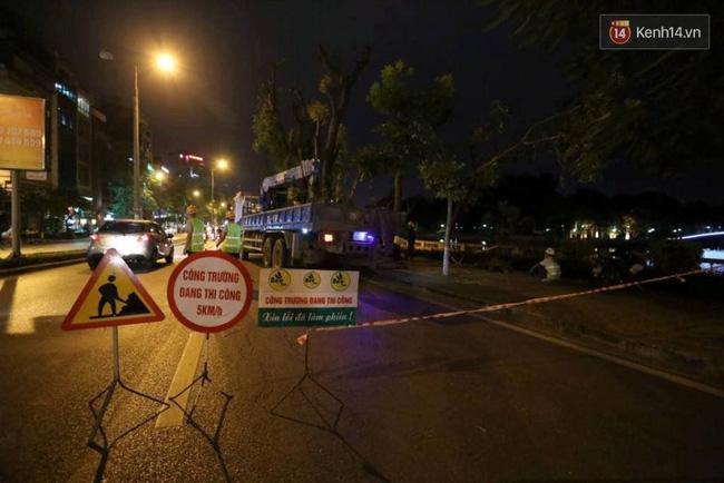 Công nhân trắng đêm di dời hàng cây xà cừ trên đường Kim Mã - Ảnh 1.