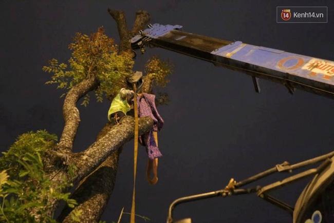 Công nhân trắng đêm di dời hàng cây xà cừ trên đường Kim Mã - Ảnh 3.