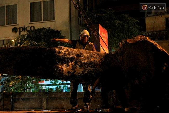 Công nhân trắng đêm di dời hàng cây xà cừ trên đường Kim Mã - Ảnh 7.
