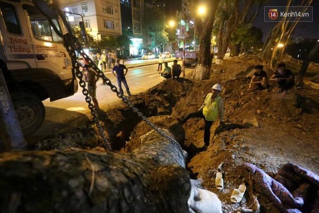 Công nhân trắng đêm di dời hàng cây xà cừ trên đường Kim Mã - Ảnh 8.