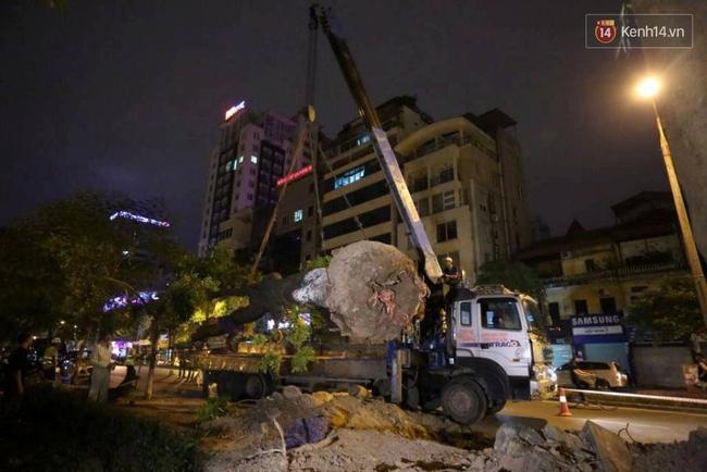 Công nhân trắng đêm di dời hàng cây xà cừ trên đường Kim Mã - Ảnh 9.