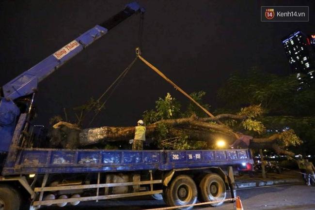 Công nhân trắng đêm di dời hàng cây xà cừ trên đường Kim Mã - Ảnh 11.