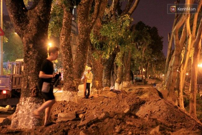 Công nhân trắng đêm di dời hàng cây xà cừ trên đường Kim Mã - Ảnh 14.