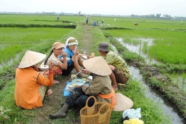 cơm trưa của người nông dân