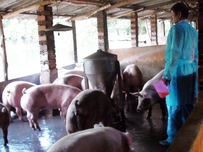 Người Sài Gòn sẽ dùng điện thoại soi chất lượng thịt heo