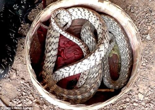 Ngày nay, tuy không còn phổ biến như trước nhưng nghệ thuật điều khiển rắn vẫn luôn được người dân trong làng lưu truyền và gìn giữ.