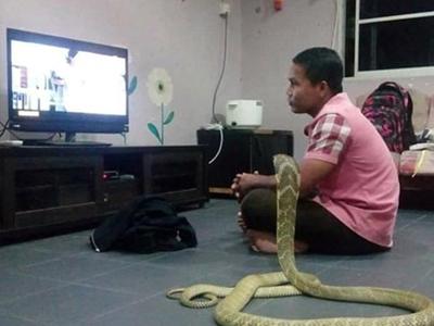 Chàng trai Thái sống hạnh phúc với vợ là... rắn hổ mang