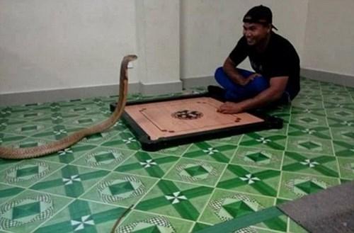 Chàng trai Thái sống hạnh phúc với vợ là... rắn hổ mang ảnh 2