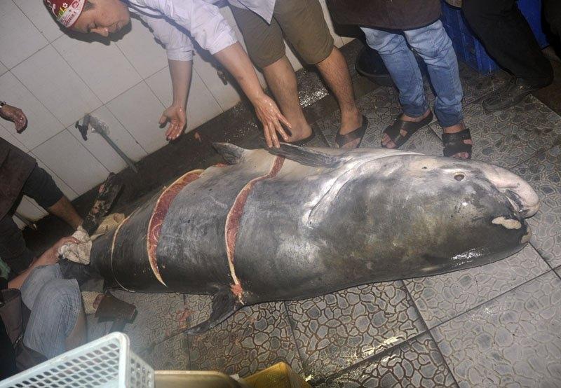 """Bắt được """"thủy quái"""" sông Mekong nặng 230kg"""