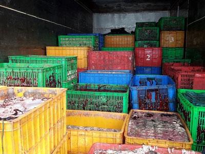 Đổ 5 tấn nội tạng động vật thối xuống nhánh sông Đồng Nai