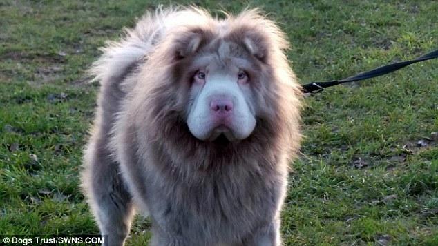 Cư dân mạng phát lú vì không biết đây là chó hay sư tử - Ảnh 3.
