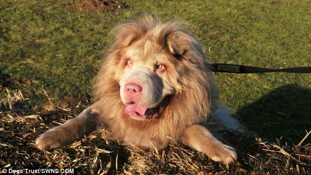 Cư dân mạng phát lú vì không biết đây là chó hay sư tử - Ảnh 4.