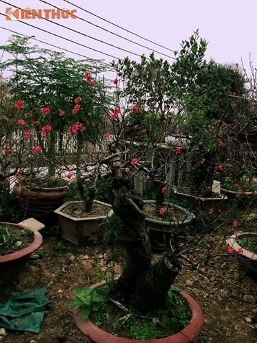 Dao That Thon gia nghin do chay hang truoc Tet Dinh Dau-Hinh-8
