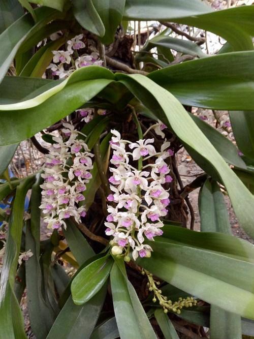 Đai châu, hồ điệp, địa lan là những loại hoa được nhiều người lựa chọn, đặt mua để chơi và biếu Tết