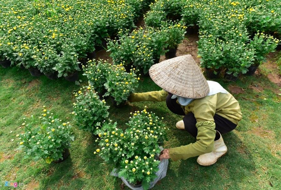 Lang hoa dep it nguoi biet o Hung Yen hinh anh 9
