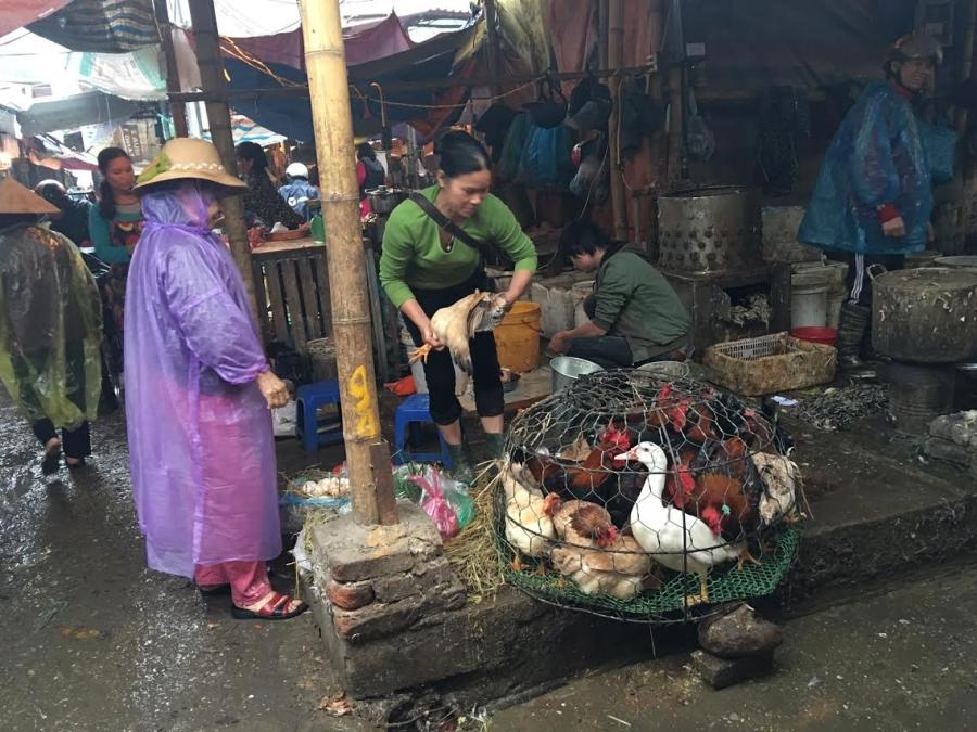 Cấm gà vịt sống, giết mổ tại chợ: Biết bẩn vẫn khó bỏ