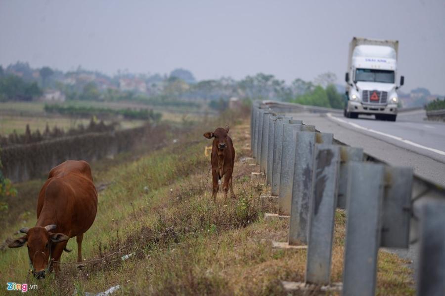 Nha xe ne camera bat khach tren cao toc Noi Bai hinh anh 11