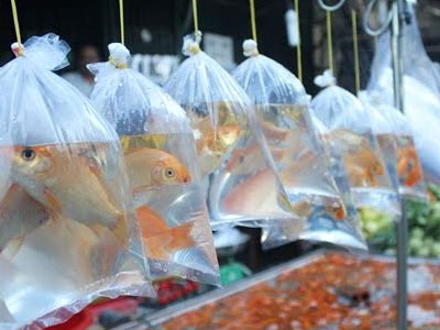 Gần nửa triệu đồng một kg cá chép vẫn