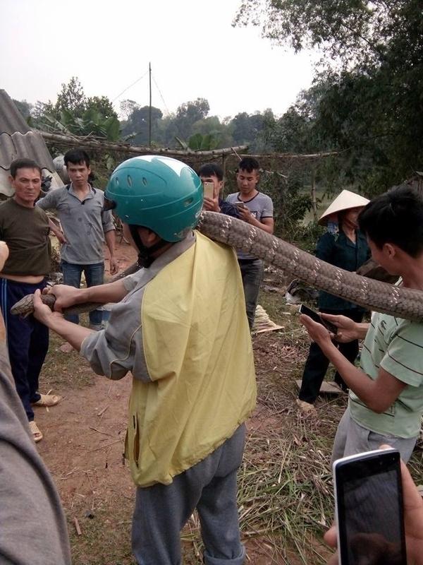 Đám thanh niên vây bắt rắn Hổ mang chúa bò bên vệ đường kịch tính hơn cả phim kinh dị Mỹ, có quá liều mạng?