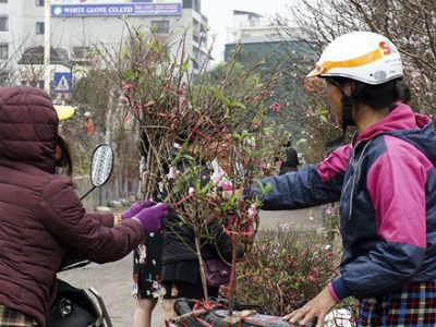 Đào Nhật Tân tấp nập ra chợ trước ngày Rằm tháng Giêng