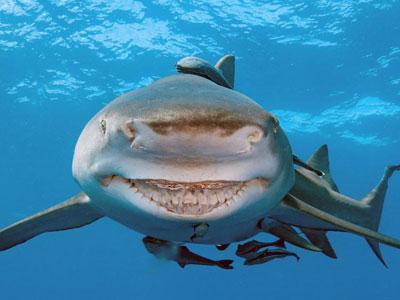 """Cá mập Mỹ luôn nhe răng cười như """"nhân vật"""" phim hoạt hình"""