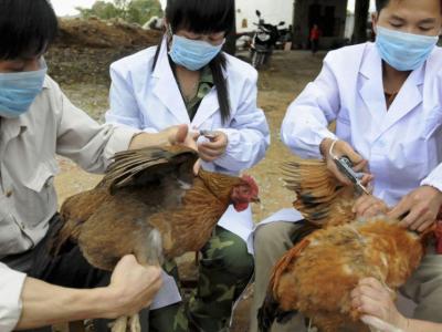 Bộ Y tế ra công văn khẩn khi dịch cúm H7N9 tiến sát Việt Nam