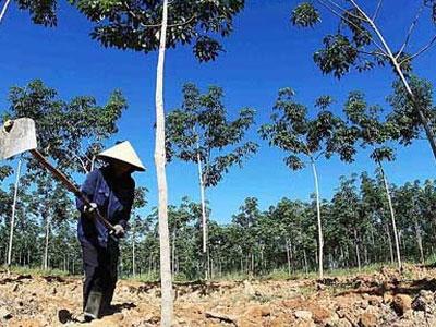 Doanh nghiệp Việt bị lừa ở Lào, Campuchia vì tin