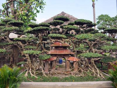 Vườn cảnh tiền tỷ của lão nông chơi cây nổi tiếng Hà thành