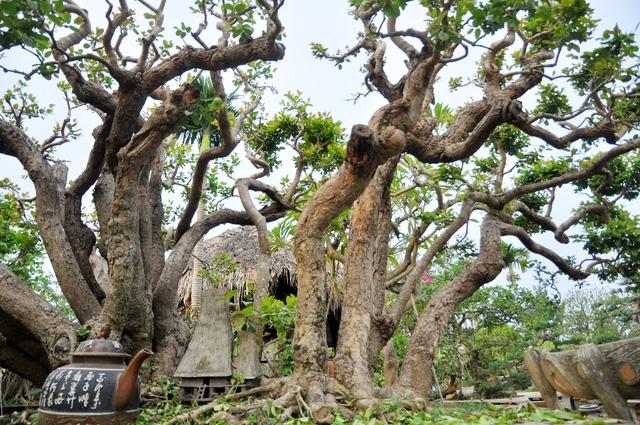 Vườn cảnh tiền tỷ của lão nông chơi cây nổi tiếng Hà thành - 1