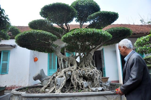 Vườn cảnh tiền tỷ của lão nông chơi cây nổi tiếng Hà thành - 7