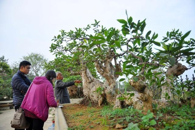 Vườn cảnh tiền tỷ của lão nông chơi cây nổi tiếng Hà thành - 9