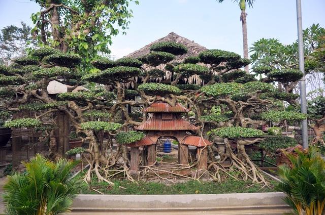 Vườn cảnh tiền tỷ của lão nông chơi cây nổi tiếng Hà thành - 11