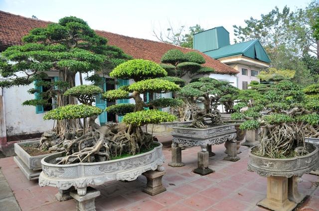 Vườn cảnh tiền tỷ của lão nông chơi cây nổi tiếng Hà thành - 12