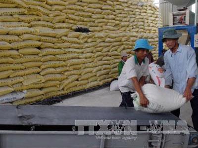 Xác minh việc xin giấy phép xuất khẩu gạo phải