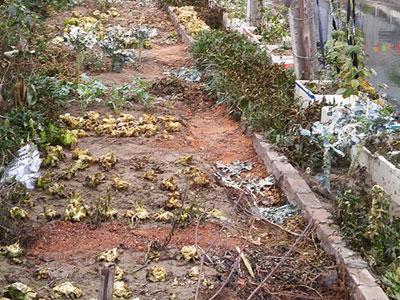 Đầu độc vườn rau sạch nhà hàng xóm khiến 6 người ngộ độc