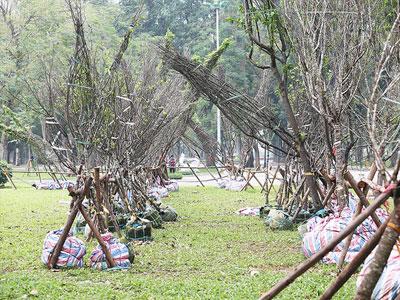 Hàng trăm cây anh đào nằm chỏng chơ trong công viên Hà Nội