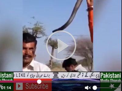 Đứng xem biểu diễn rắn độc, du khách Ấn Độ bị cắn chết