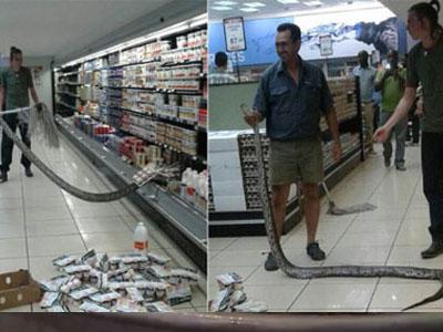 Rắn hổ mang chui vào tủ lạnh nhà dân tránh nóng