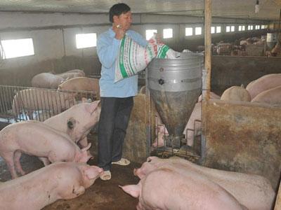 Tài chính, ngân hàng đồng loạt ra văn bản giải cứu thịt lợn