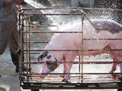 Người Hà Nội vẫn mua thịt heo giá 100.000 đồng mỗi kg