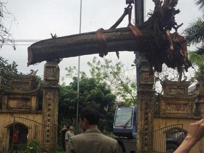 Đại gia gỗ Đồng Kỵ tiết lộ sốc vụ mua cây sưa 200 tuổi ở Đông Cốc