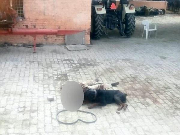 Ấn Độ: Chủ bị chó dữ cắn chết, ăn xác