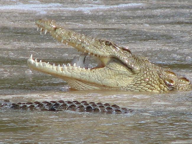 Vượt sông, người đàn ông bị 3 con quái vật cá sấu xâu xé hết chỉ trong vài phút - Ảnh 1.
