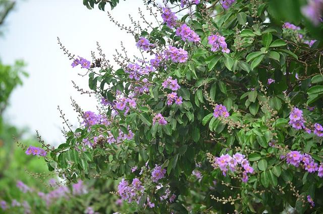 Loài hoa biểu trưng cho mùa hè.