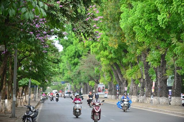 Vẻ đẹp của hoa bằng lăng là nét nên thơ của thành phố trong mùa hè