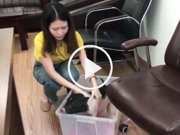 Video: Chán nấu ăn, thánh nữ công sở đem