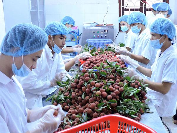 Giá trị xuất khẩu rau quả tiếp tục