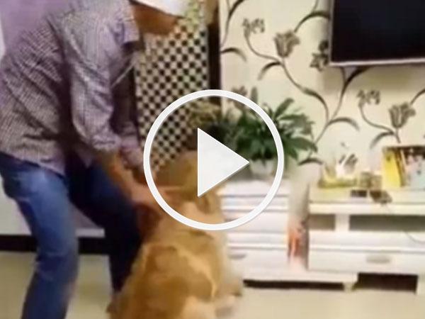 Video: Xem xong clip, bạn sẽ muốn nuôi một chú chó tức thì