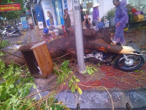HN: Cành cây cổ thụ đè trúng 2 người sau trận cuồng phong